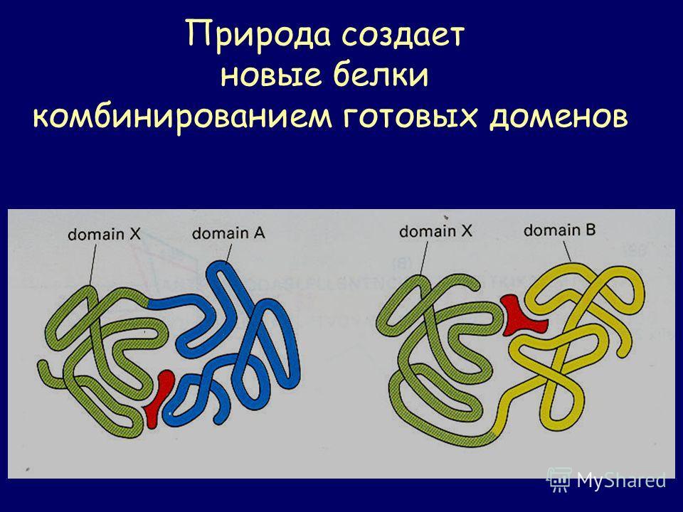Природа создает новые белки комбинированием готовых доменов