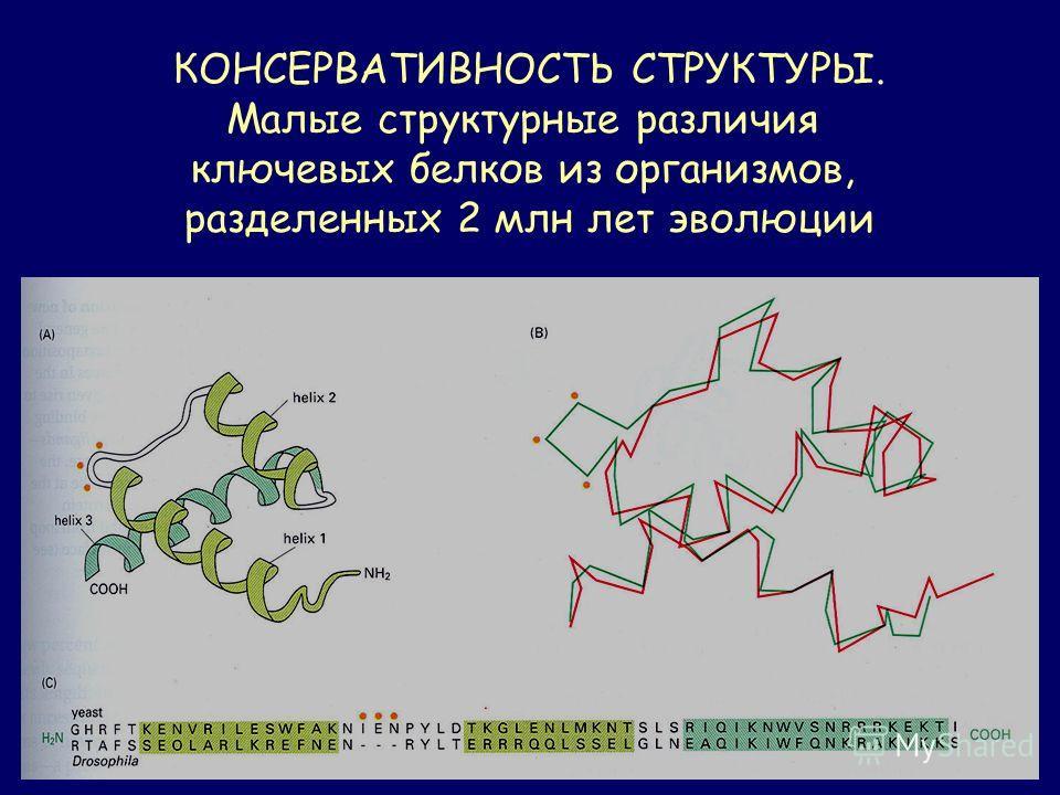 КОНСЕРВАТИВНОСТЬ СТРУКТУРЫ. Малые структурные различия ключевых белков из организмов, разделенных 2 млн лет эволюции