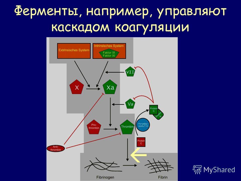 Ферменты, например, управляют каскадом коагуляции