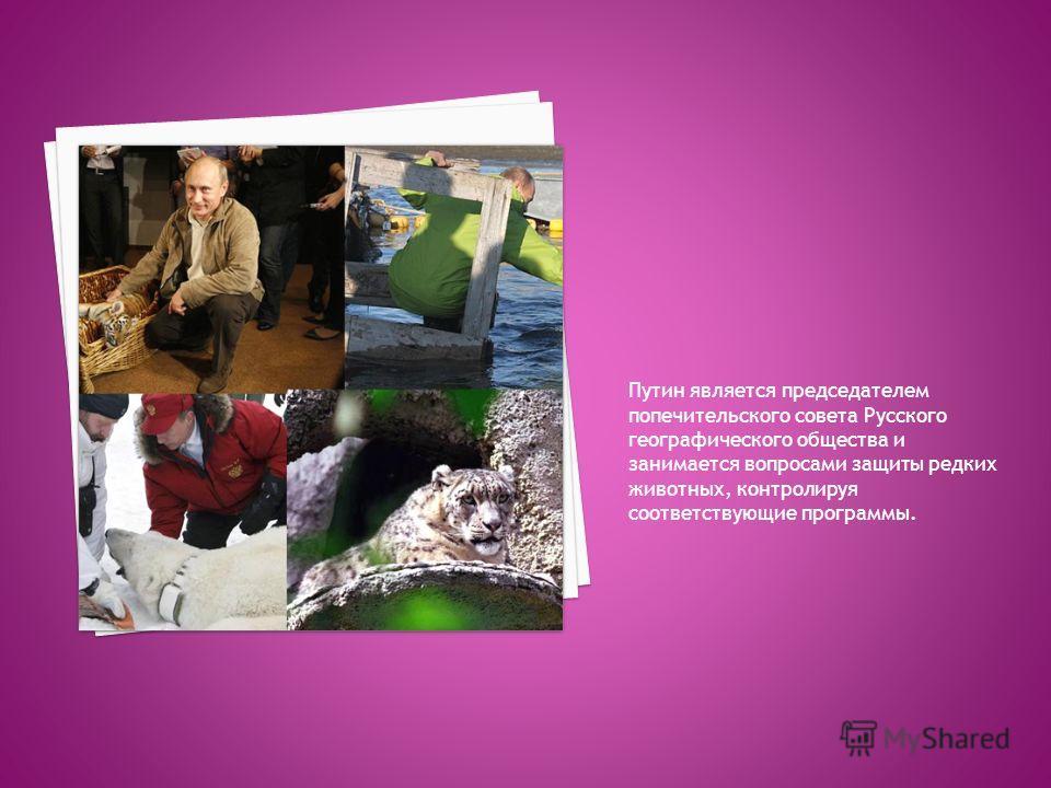 Путин является председателем попечительского совета Русского географического общества и занимается вопросами защиты редких животных, контролируя соответствующие программы.