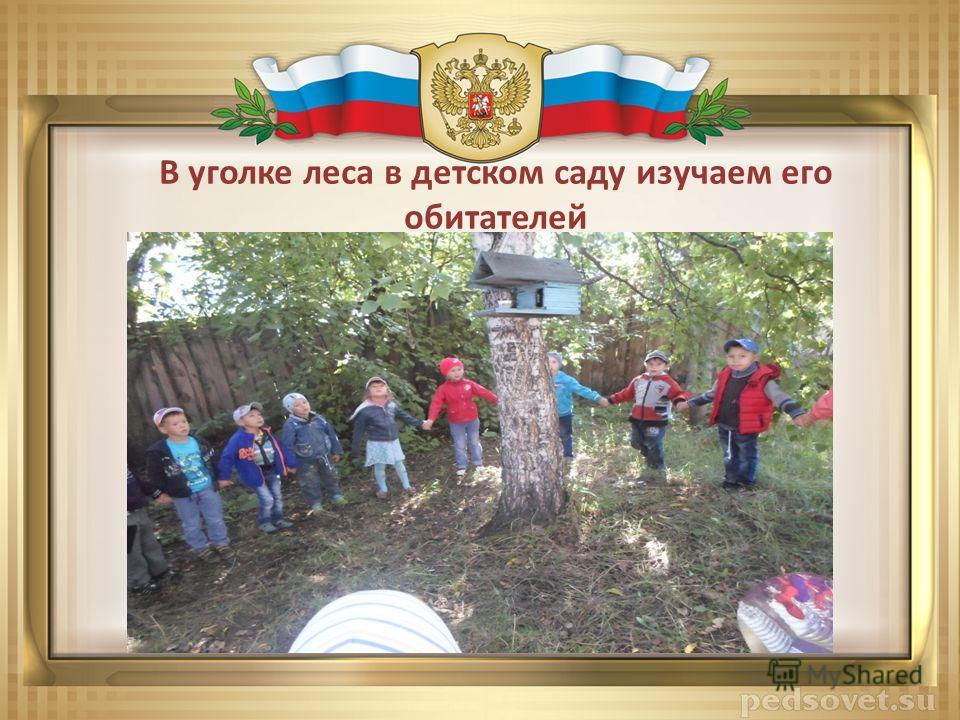В уголке леса в детском саду изучаем его обитателей