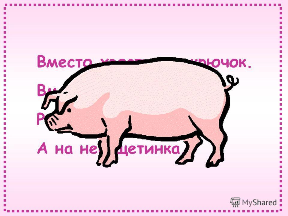 Вместо хвостика – крючок. Вместо носа – пятачок. Розовая спинка, А на ней щетинка.