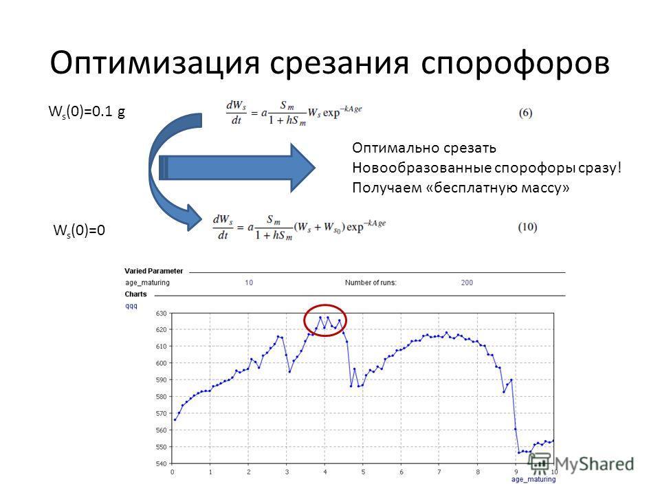 Оптимизация срезания спорофоров W s (0)=0.1 g Оптимально срезать Новообразованные спорофоры сразу! Получаем «бесплатную массу» W s (0)=0