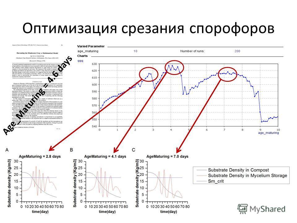 Оптимизация срезания спорофоров Age_Maturing = 4.6 days