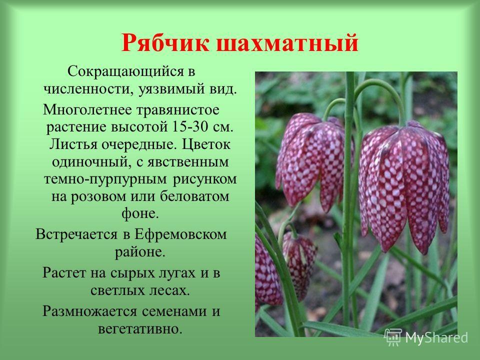 Рябчик шахматный Сокращающийся в численности, уязвимый вид. Многолетнее травянистое растение высотой 15-30 см. Листья очередные. Цветок одиночный, с явственным темно-пурпурным рисунком на розовом или беловатом фоне. Встречается в Ефремовском районе.