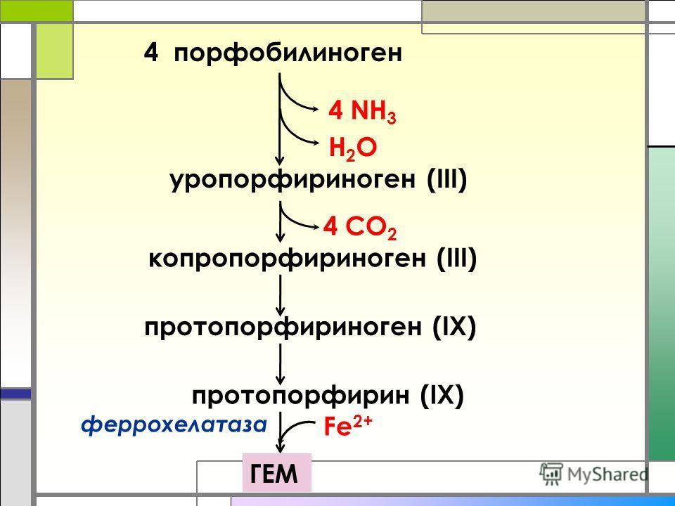 4 порфобилиноген 4 NH 3 H2OH2O уропорфириноген (III) копропорфириноген (III) протопорфириноген (IХ) 4 СО 2 протопорфирин (IХ) ГЕМ Fe 2+ феррохелатаза