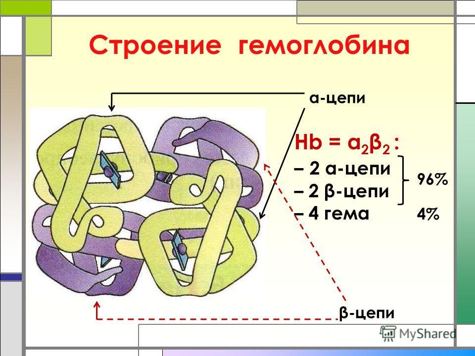 Строение гемоглобина α-цепи β-цепи Hb = α 2 β 2 : – 2 α-цепи – 2 β-цепи – 4 гема 4% 96%