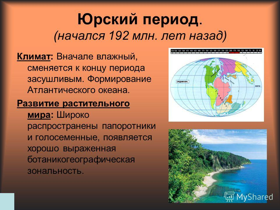 Юрский период. (начался 192 млн. лет назад) Климат: Вначале влажный, сменяется к концу периода засушливым. Формирование Атлантического океана. Развитие растительного мира: Широко распространены папоротники и голосеменные, появляется хорошо выраженная