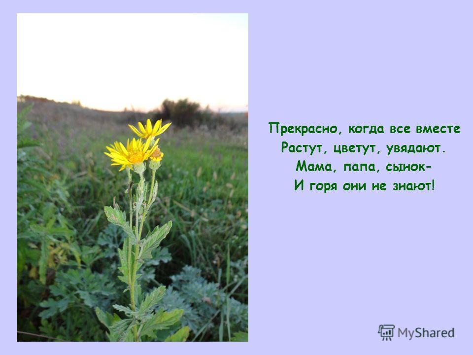 Прекрасно, когда все вместе Растут, цветут, увядают. Мама, папа, сынок- И горя они не знают!