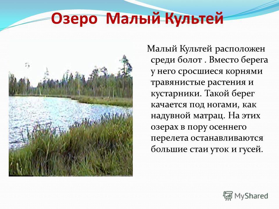 Озеро Малый Культей Малый Культей расположен среди болот. Вместо берега у него сросшиеся корнями травянистые растения и кустарники. Такой берег качается под ногами, как надувной матрац. На этих озерах в пору осеннего перелета останавливаются большие