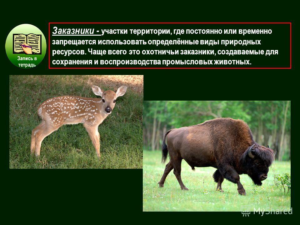 Заказники - участки территории, где постоянно или временно запрещается использовать определённые виды природных ресурсов. Чаще всего это охотничьи заказники, создаваемые для сохранения и воспроизводства промысловых животных.