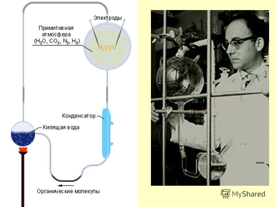 Основные положения теории возникновения жизни на Земле 1. Органические вещества сформировались из неорганических под действием физических факторов среды. 2. Органические вещества взаимодействовали, образуя все более сложные вещества, в результате чег