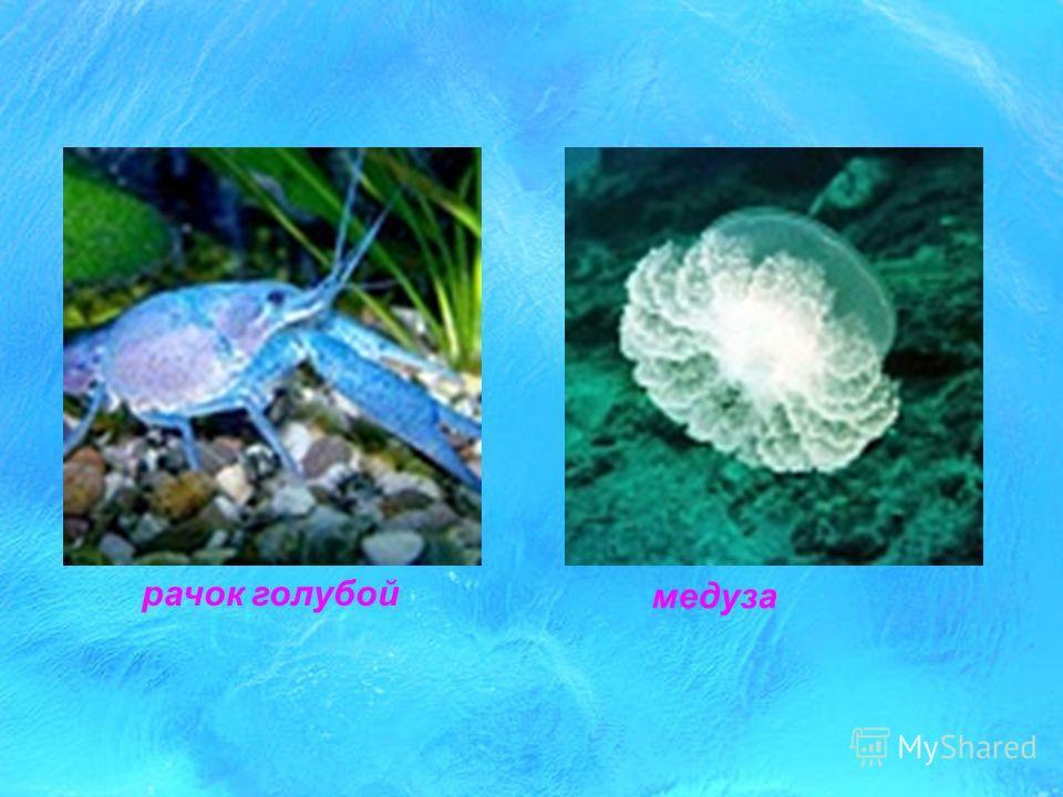 медуза горящая медуза