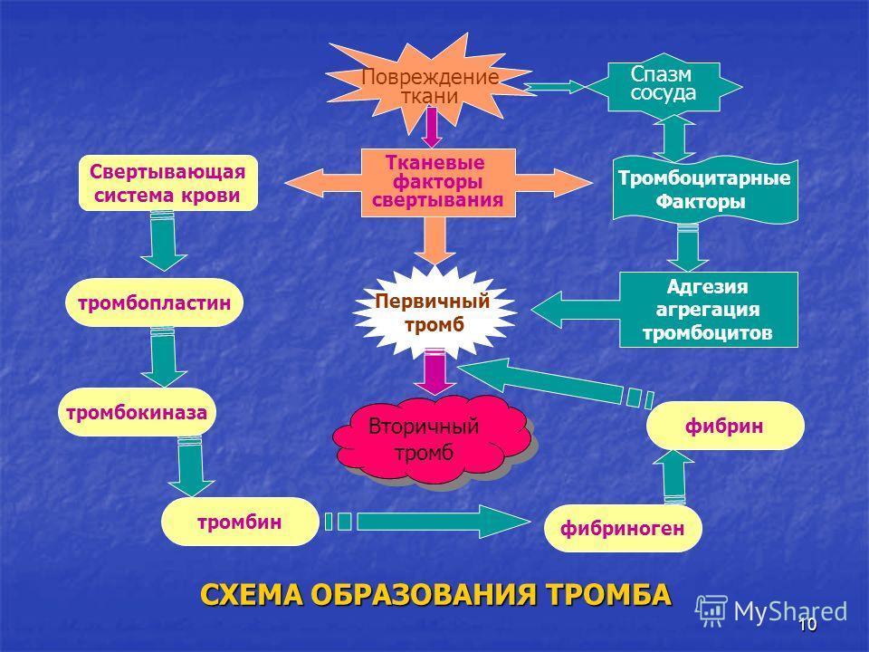 Тромбопластин фото