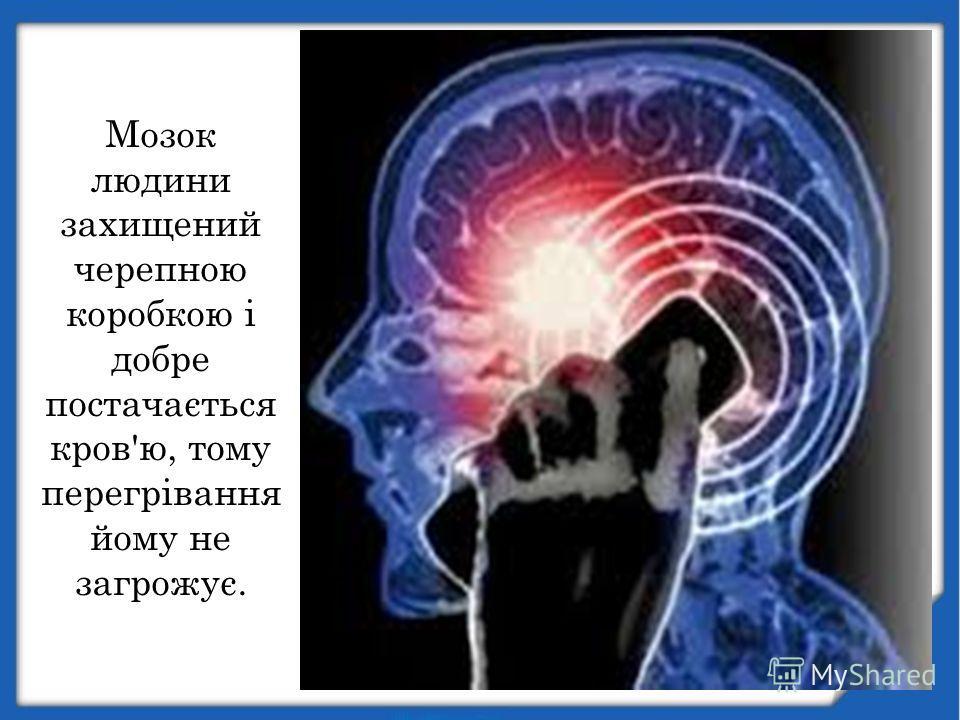 Мозок людини захищений черепною коробкою і добре постачається кров'ю, тому перегрівання йому не загрожує.