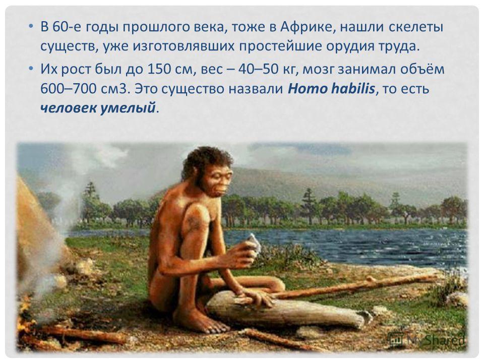 В 60-е годы прошлого века, тоже в Африке, нашли скелеты существ, уже изготовлявших простейшие орудия труда. Их рост был до 150 см, вес – 40–50 кг, мозг занимал объём 600–700 см 3. Это существо назвали Homo habilis, то есть человек умелый.