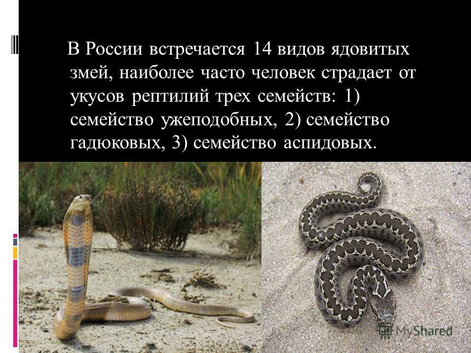 В России встречается 14 видов ядовитых змей, наиболее часто человек страдает от укусов рептилий трех семейств: 1) семейство мужеподобных, 2) семейство гадюковых, 3) семейство аспидовых.
