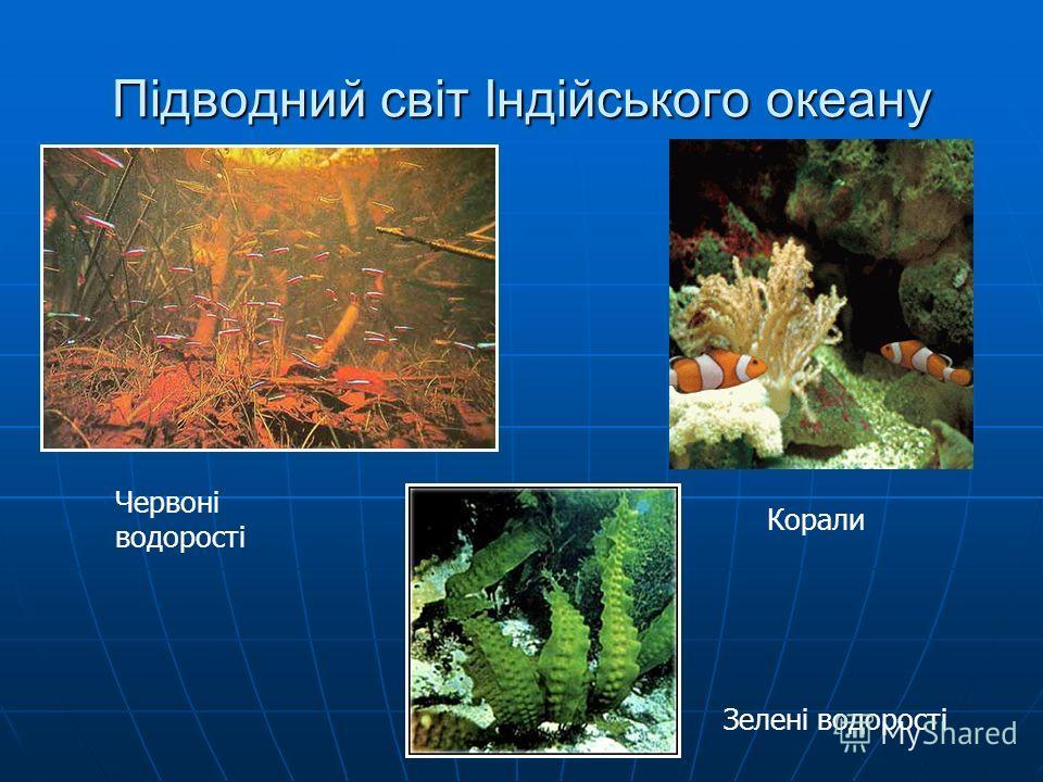 Підводний світ Індійського океану Червоні водорості Корали Зелені водорості