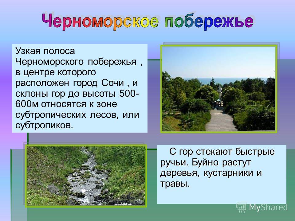 Узкая полоса Черноморского побережья, в центре которого расположен город Сочи, и склоны гор до высоты 500- 600 м относятся к зоне субтропических лесов, или субтропиков. С гор стекают быстрые ручьи. Буйно растут деревья, кустарники и травы.