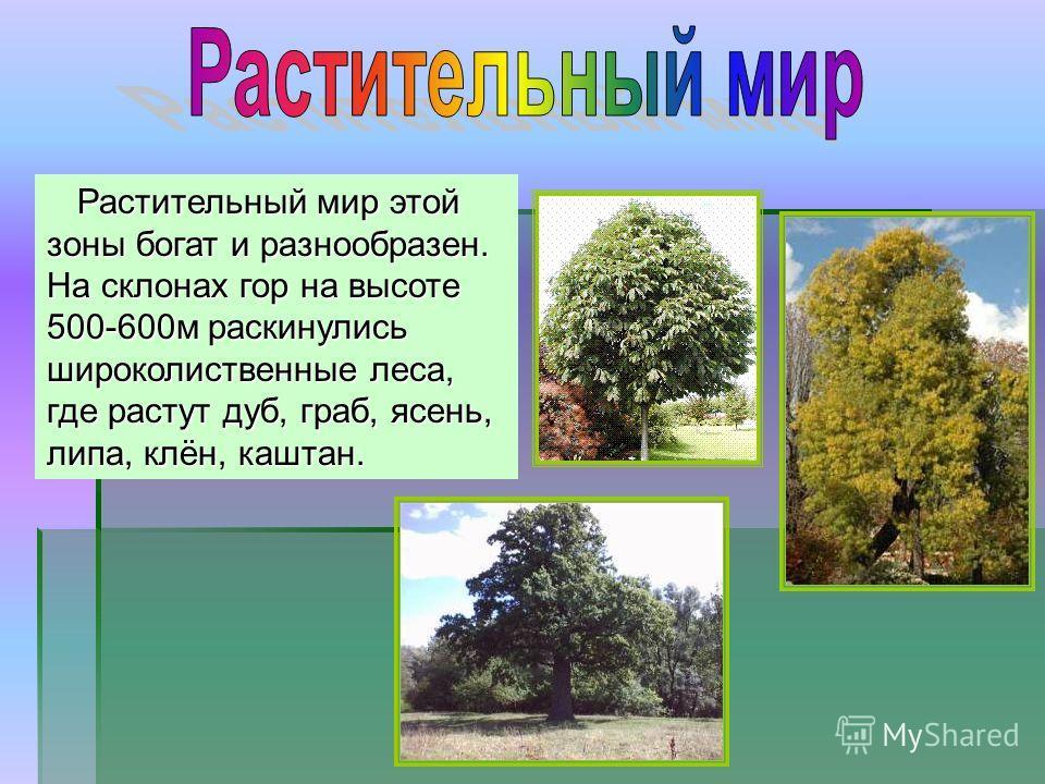 Растительный мир этой зоны богат и разнообразен. На склонах гор на высоте 500-600 м раскинулись широколиственные леса, где растут дуб, граб, ясень, липа, клён, каштан.