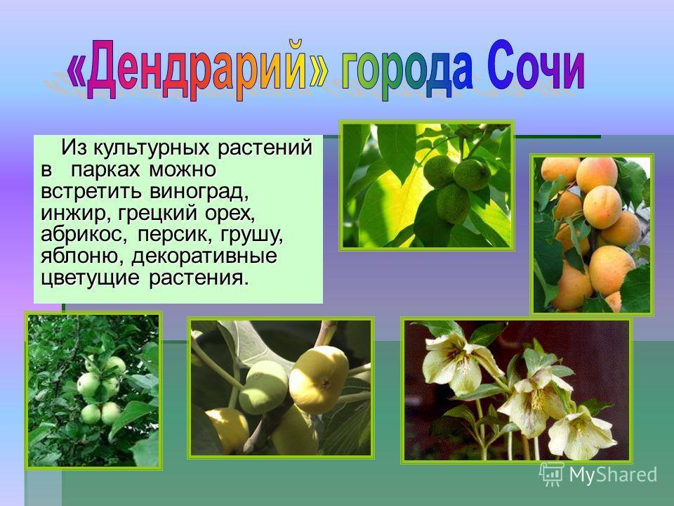 Из культурных растений в парках можно встретить виноград, инжир, грецкий орех, абрикос, персик, грушу, яблоню, декоративные цветущие растения.