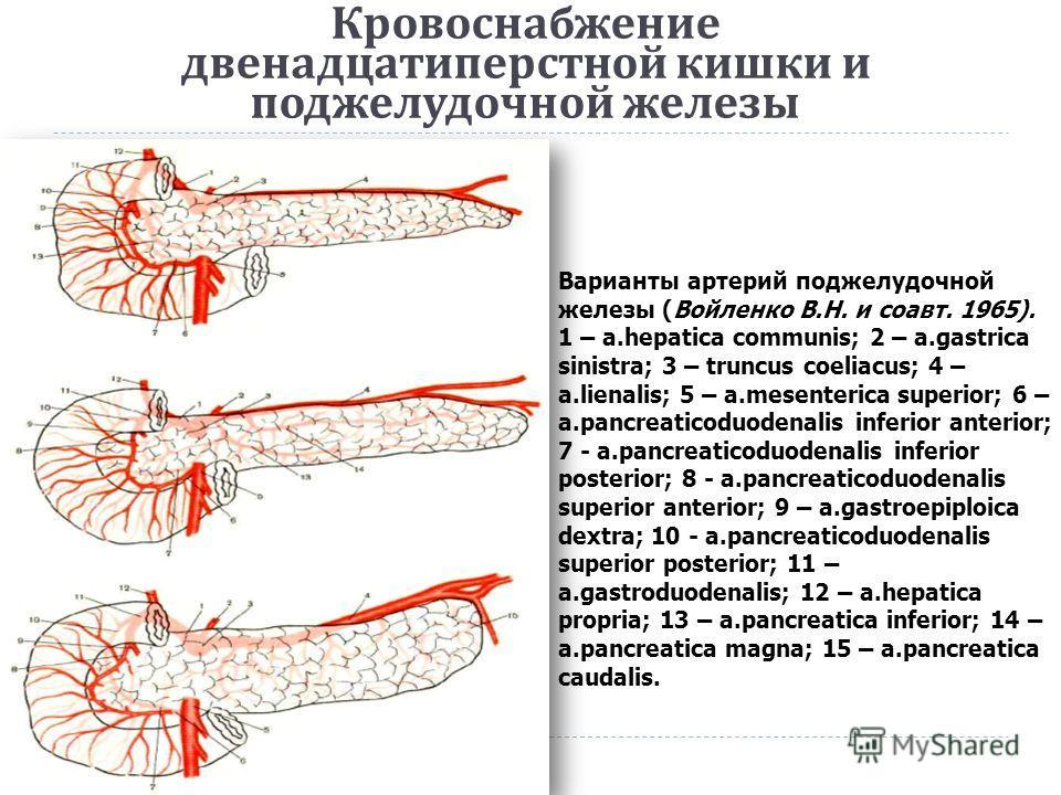 Кровоснабжение двенадцатиперстной кишки и поджелудочной железы Варианты артерий поджелудочной железы (Войленко В.Н. и соавт. 1965). 1 – a.hepatica communis; 2 – a.gastrica sinistra; 3 – truncus coeliacus; 4 – a.lienalis; 5 – a.mesenterica superior; 6