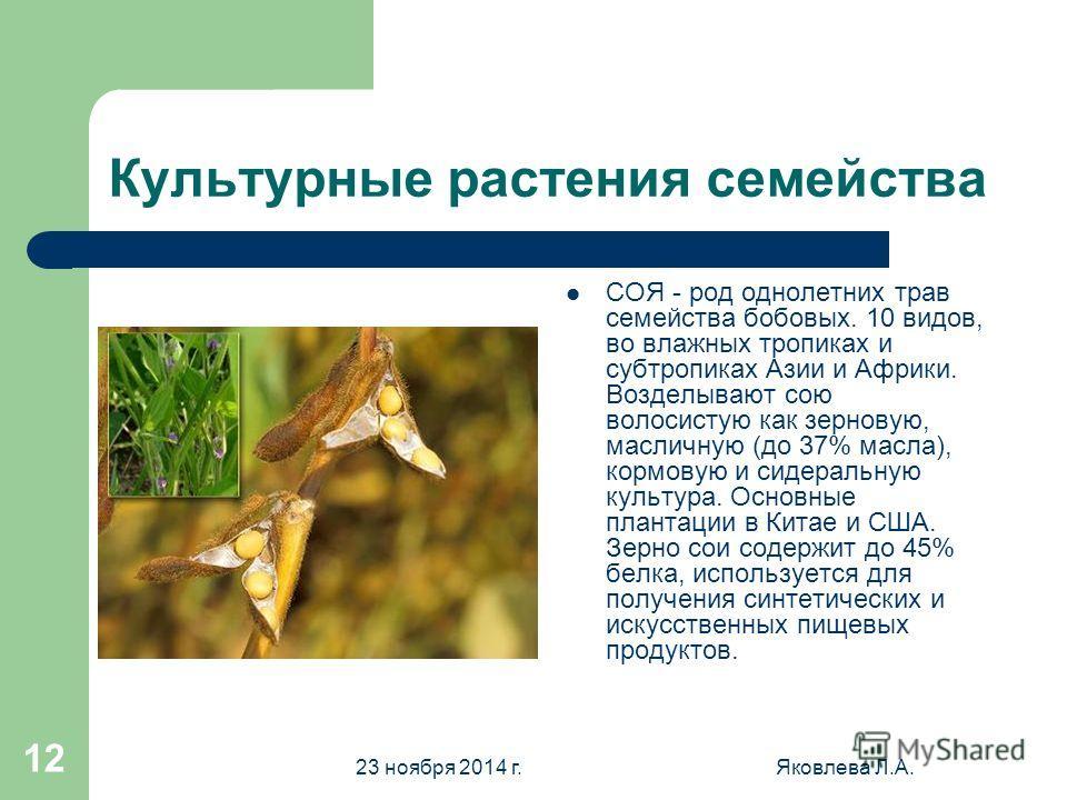 23 ноября 2014 г.Яковлева Л.А. 11 Клевер луговой