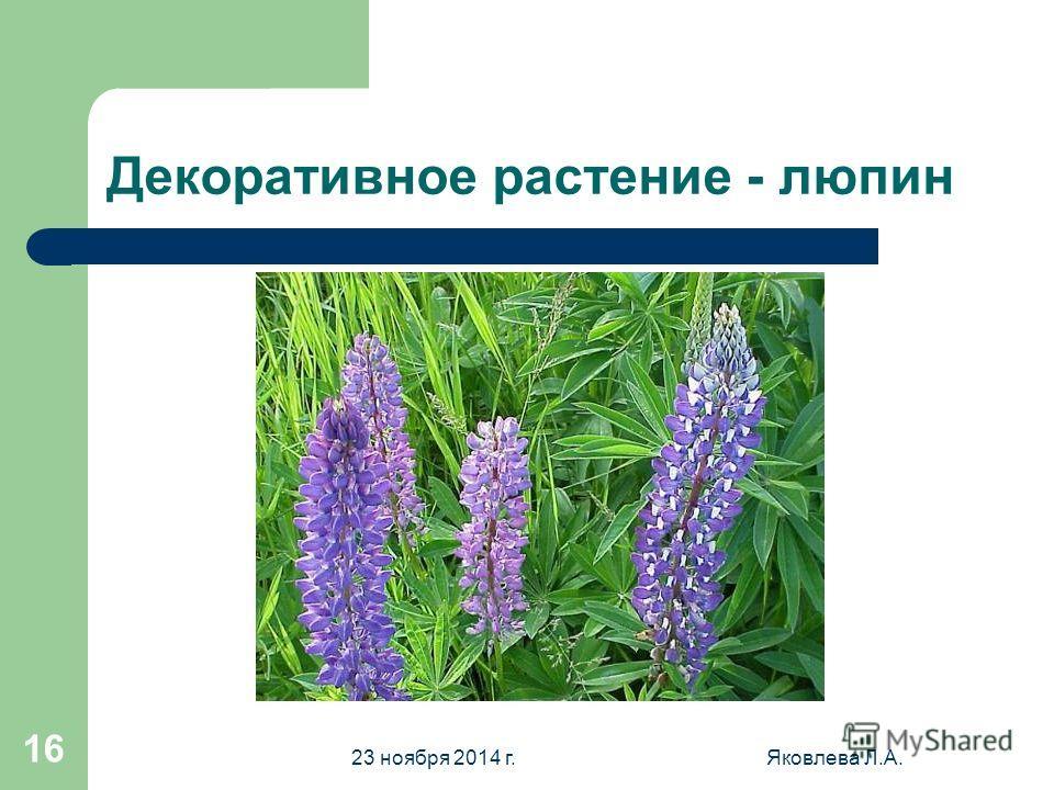23 ноября 2014 г.Яковлева Л.А. 15 Горох посевной