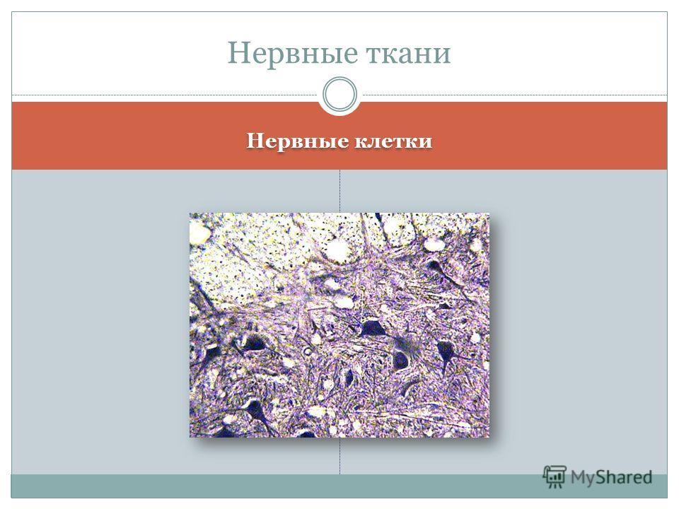 Нервные клетки Нервные ткани
