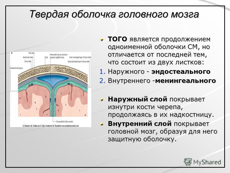 Твердая оболочка головного мозга ТОГО является продолжением одноименной оболочки СМ, но отличается от последней тем, что состоит из двух листков: 1. Наружного - эндостеального 2. Внутреннего -менингеального Наружный слой покрывает изнутри кости череп