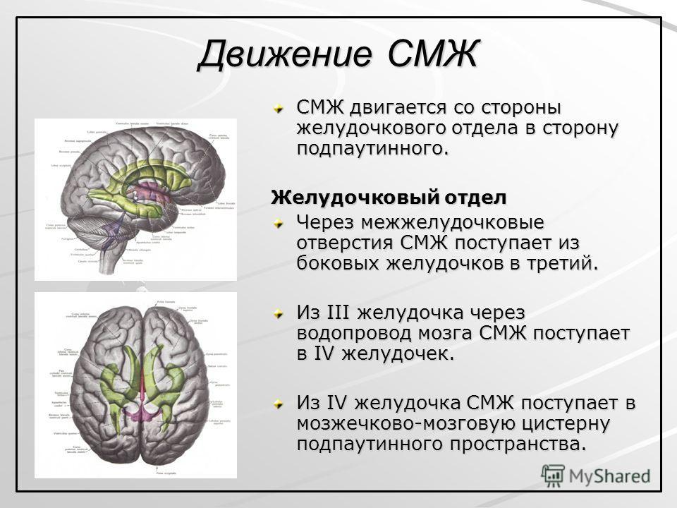 Движение СМЖ СМЖ двигается со стороны желудочкового отдела в сторону подпаутинного. Желудочковый отдел Через межжелудочковые отверстия СМЖ поступает из боковых желудочков в третий. Из III желудочка через водопровод мозга СМЖ поступает в IV желудочек.