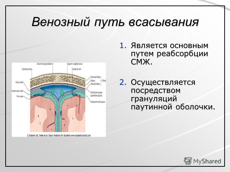 Венозный путь всасывания 1. Является основным путем реабсорбции СМЖ. 2. Осуществляется посредством грануляций паутинной оболочки.