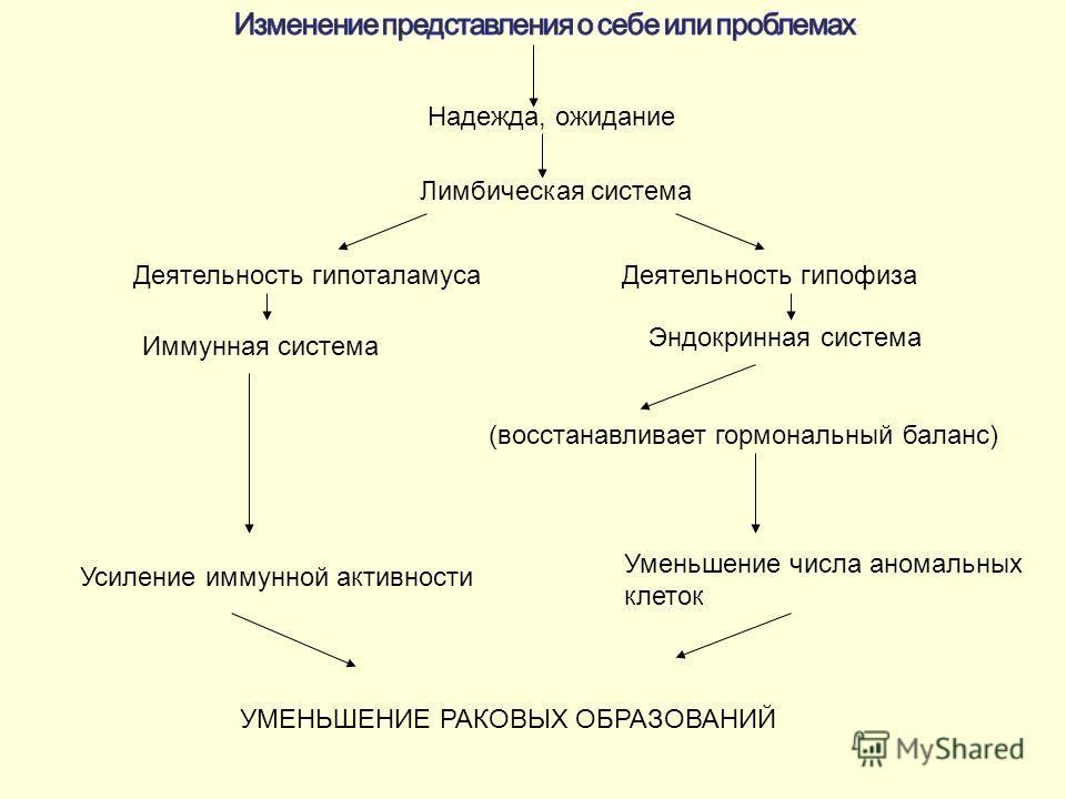 Надежда, ожидание Лимбическая система Деятельность гипоталамуса Деятельность гипофиза Иммунная система Эндокринная система (восстанавливает гормональный баланс) Усиление иммунной активности Уменьшение числа аномальных клеток УМЕНЬШЕНИЕ РАКОВЫХ ОБРАЗО
