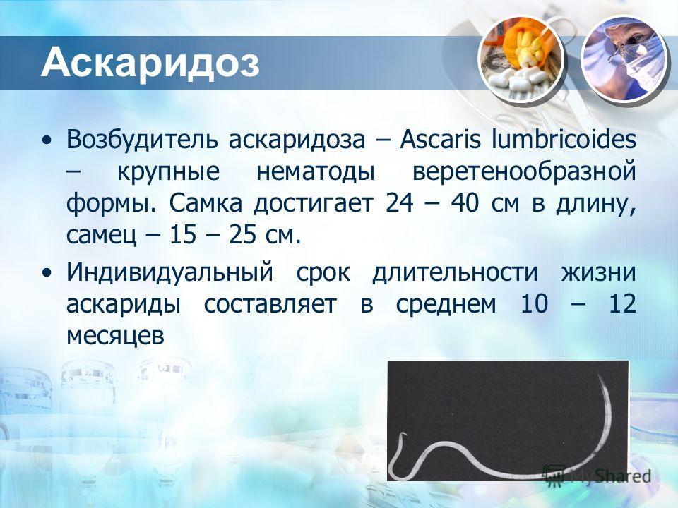 Аскаридоз Возбудитель аскаридоза – Ascaris lumbricoides – крупные нематоды веретенообразной формы. Самка достигает 24 – 40 см в длину, самец – 15 – 25 см. Индивидуальный срок длительности жизни аскариды составляет в среднем 10 – 12 месяцев
