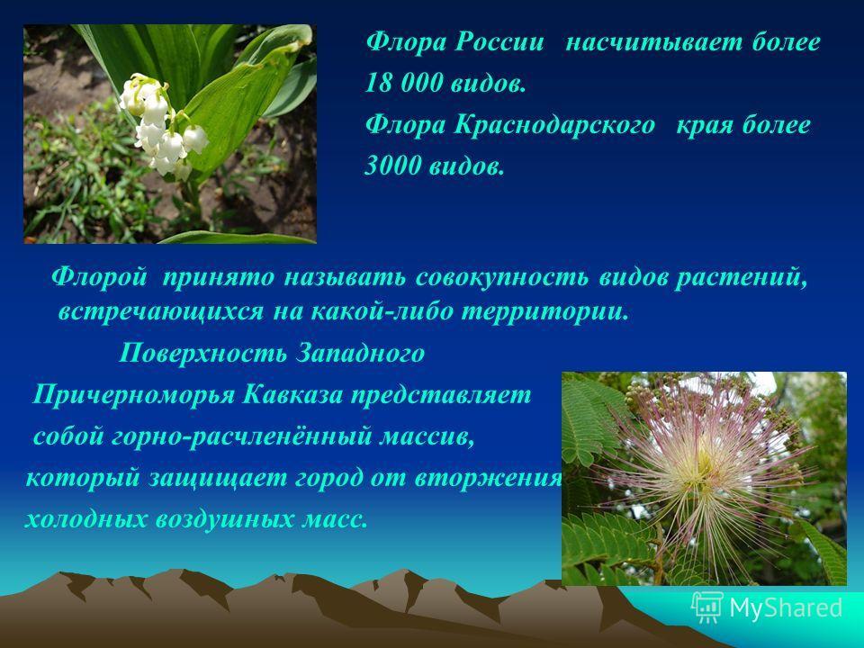 Флора России насчитывает более 18 000 видов. Флора Краснодарского края более 3000 видов. Флорой принято называть совокупность видов растений, встречающихся на какой-либо территории. Поверхность Западного Причерноморья Кавказа представляет собой горно