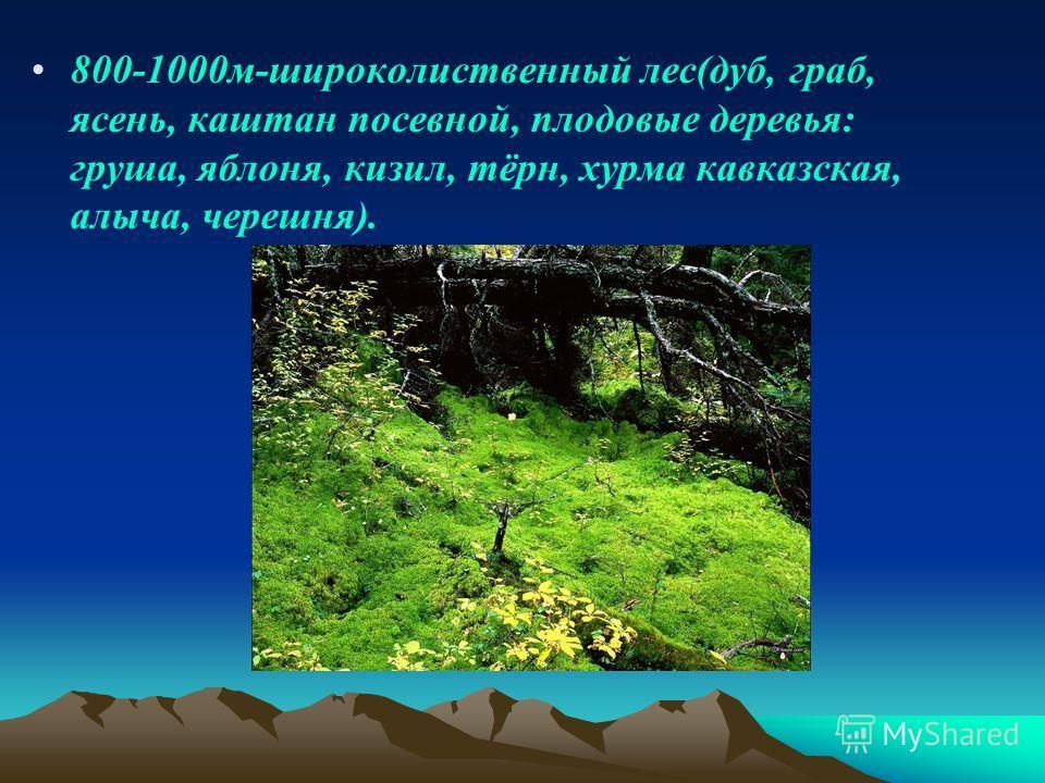800-1000 м-широколиственный лес(дуб, граб, ясень, каштан посевной, плодовые деревья: груша, яблоня, кизил, тёрн, хурма кавказская, алыча, черешня).