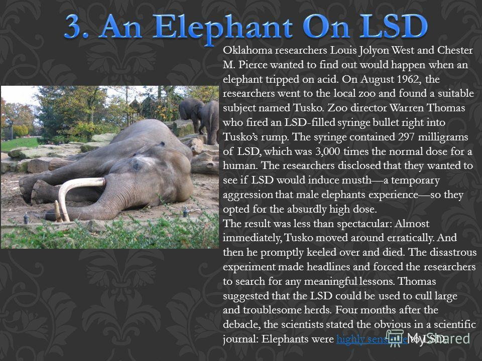 Oklahoma researchers Louis Jolyon West and Chester M. Pierce wanted to find out would happen when an elephant tripped on acid. On August 1962, the researchers went to the local zoo and found a suitable subject named Tusko. Zoo director Warren Thomas