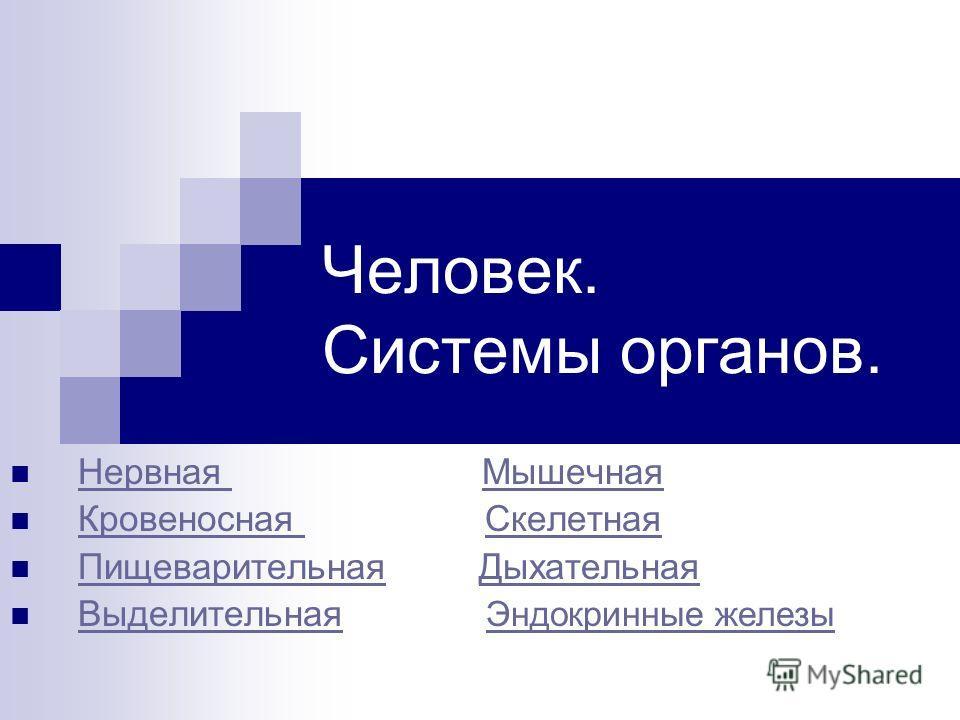 Презентация По Анатомии Дыхательная Система