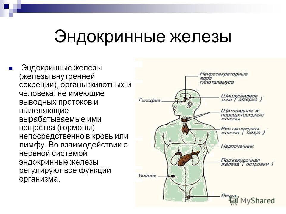 Эндокринные железы Эндокринные железы (железы внутренней секреции), органы животных и человека, не имеющие выводных протоков и выделяющие вырабатываемые ими вещества (гормоны) непосредственно в кровь или лимфу. Во взаимодействии с нервной системой эн