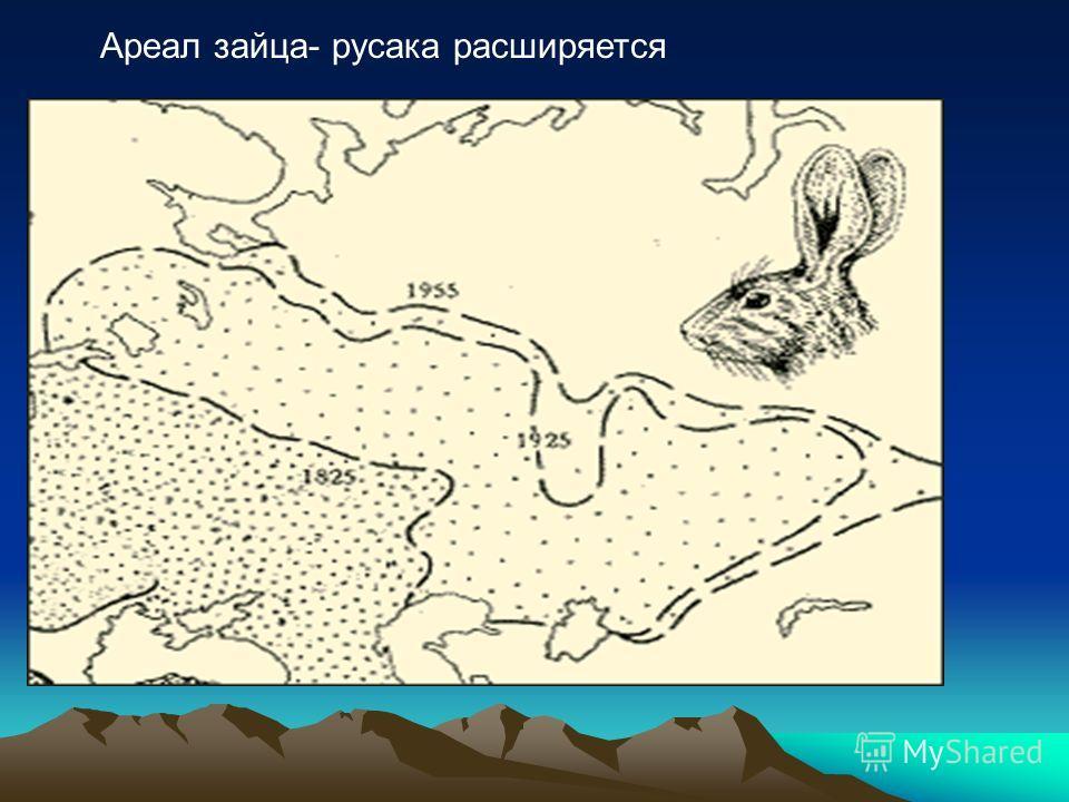 Ареал зайца- русака расширяется
