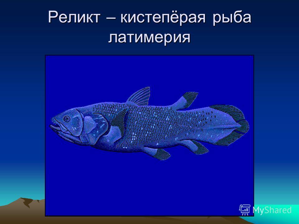 Реликт – кистепёрая рыба латимерия