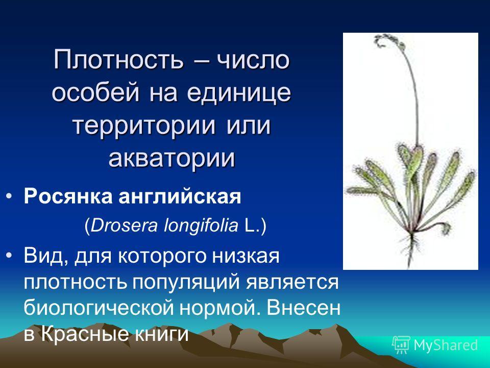 Плотность – число особей на единице территории или акватории Росянка английская (Drosera longifolia L.) Вид, для которого низкая плотность популяций является биологической нормой. Внесен в Красные книги