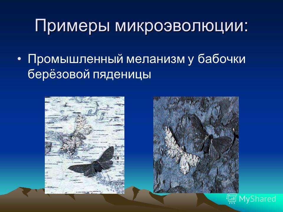 Примеры микроэволюции: Промышленный меланизм у бабочки берёзовой пяденицы