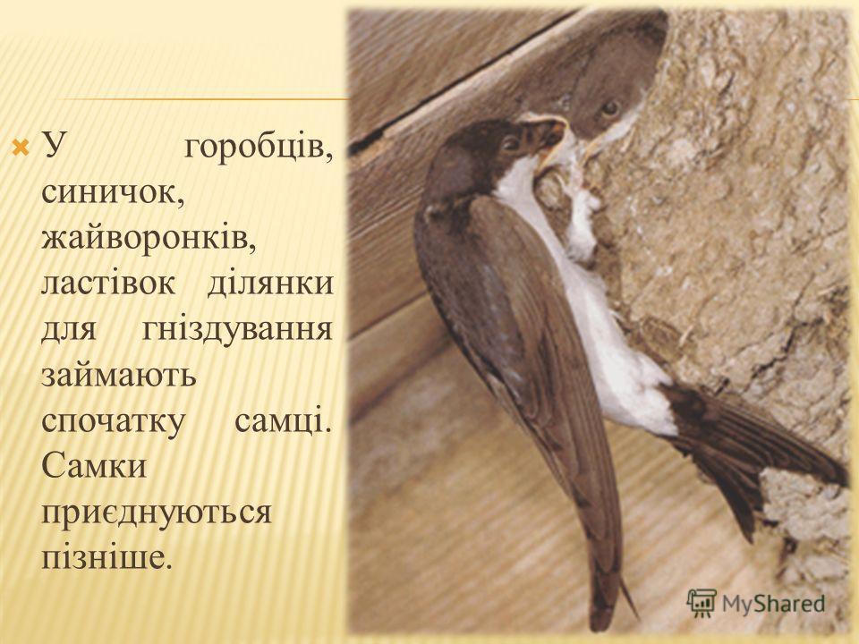 У горобців, синичек, жайворонків, ластівок ділянки для гніздування займають спочатку самці. Самки приєднуються пізніше.