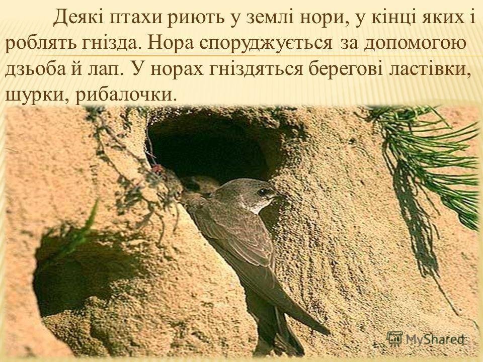 Деякі птахи риють у землі нори, у кінці яких і роблять гнізда. Нора споруджується за допомогою дзьоба й лап. У норах гніздяться берегові ластівки, шурки, рибалочки.