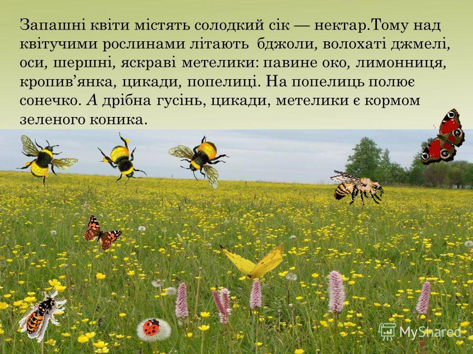 Запашні квіти містять солодкий сік нектар.Тому над квітучими рослинами літають бджоли, волохаті джмелі, оси, шершні, яскраві метелики: павине око, лимонница, кропивянка, цикады, попелиці. На попелиць полює сонечка. А дрібна гусінь, цикады, метелики є