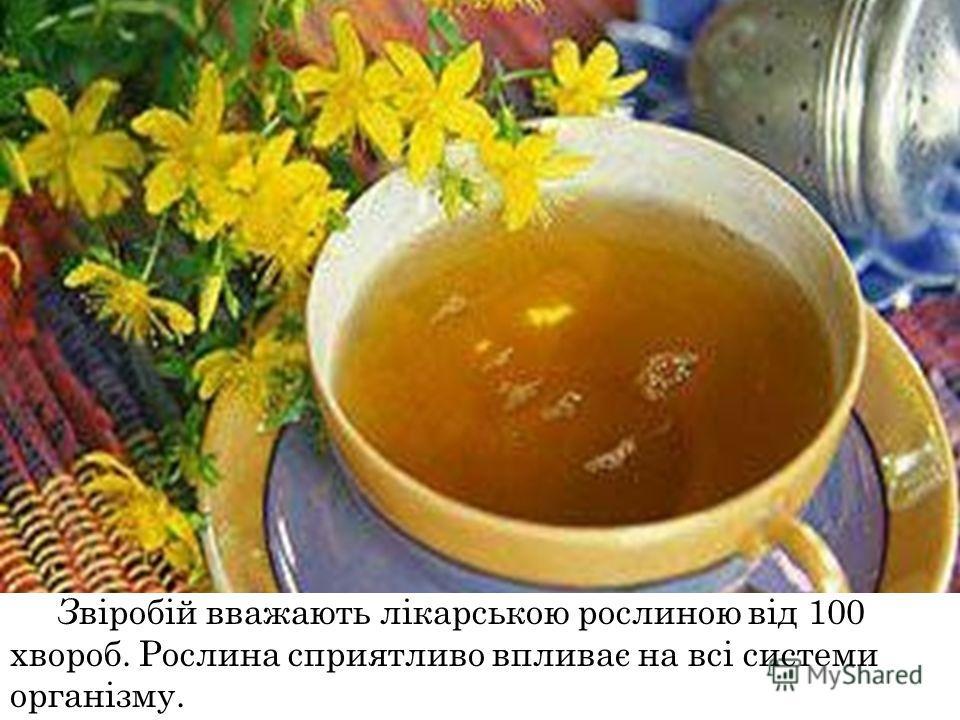 З віробій вважають лікарською рослиною від 100 хвороб. Рослина сприятливо впливає на всі системи організму.