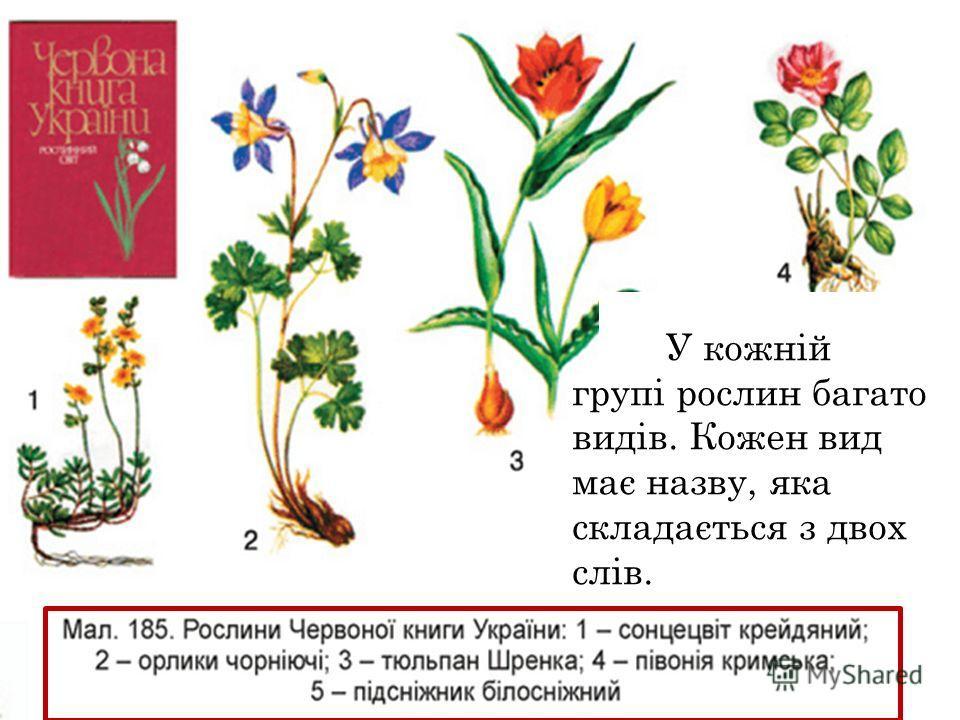У кожній группі рослин багато видів. Кожен вид має назву, яка складається з двох слів.