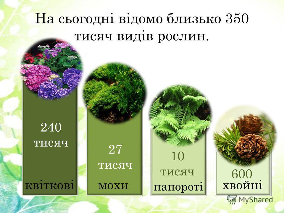 На сьогодні відомо близько 350 тысяч видів рослин. 240 тысяч 27 тысяч 10 тысяч 600 махи папороті хвойніквіткові