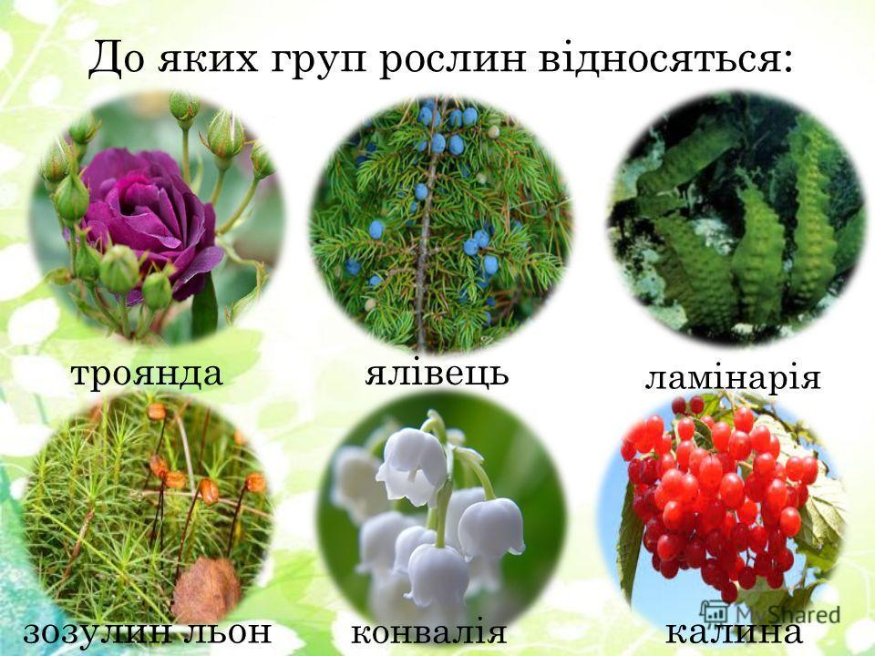 До яких групп рослин відносяться: ялівець ламінарія зозулин льон троянда конвалія калина